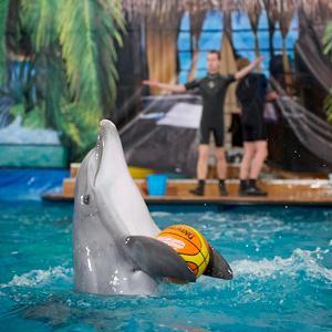 Дельфинарии, океанариумы Гаврилова Яма