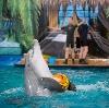 Дельфинарии, океанариумы в Гавриловом Яме